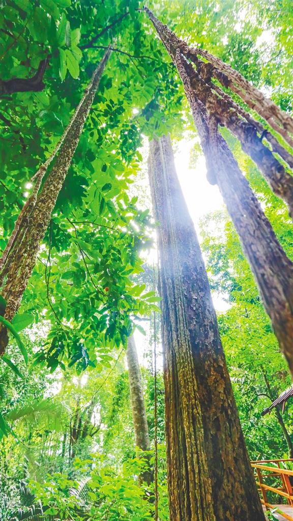 热带雨林万物生长