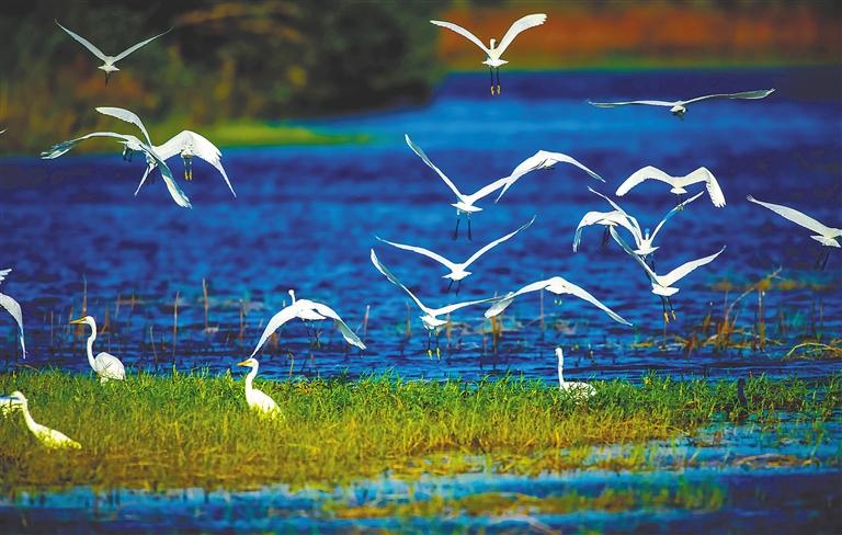 在海尾国家湿地公园,候鸟自由飞翔
