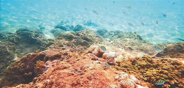 大洲岛海域的海底世界