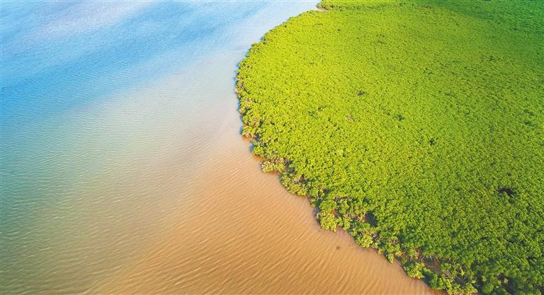 航拍海口东寨港国家级自然保护区