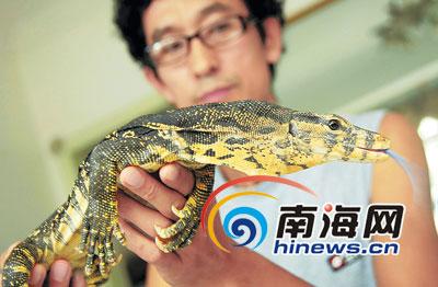 大洲岛首次发现国家Ⅰ级保护动物海南巨蜥巨蜥险成下