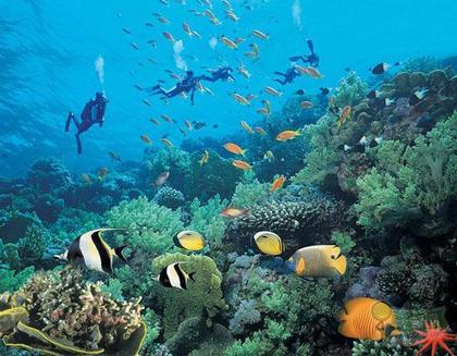 壁纸 海底 海底世界 海洋馆 水族馆 桌面 420_327