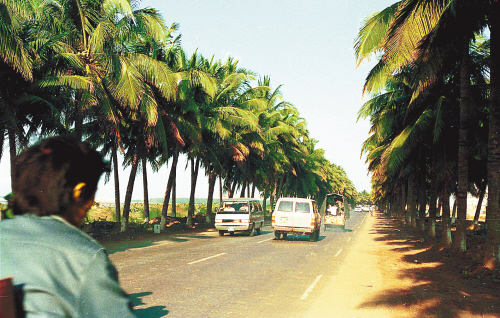 海口:20年崛起热带滨海新城