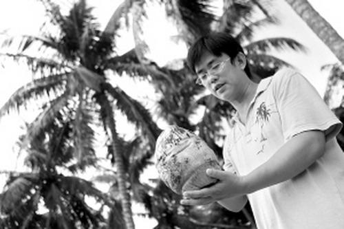 海南基本看天收果,岛内很多椰子树是几十年前甚至上百年前种植的,品种
