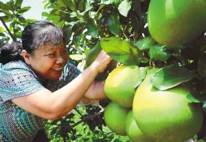 屯昌县科学发展纪实 惠风和畅木色春 -- 海南省